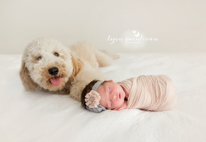 Massachusetts Newborn and Pet Photography